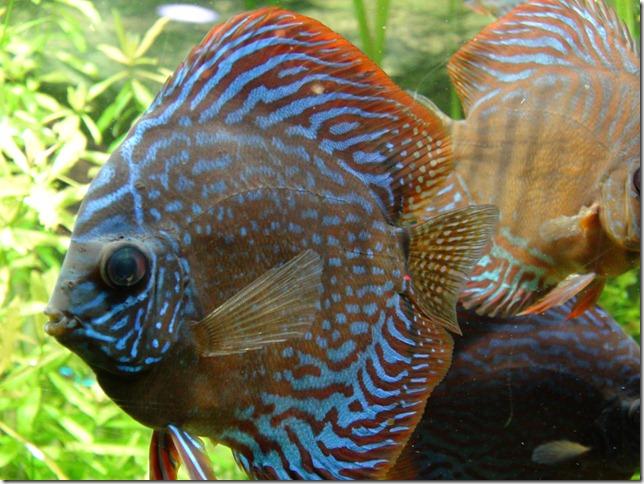 paris aquarium 102210 0005