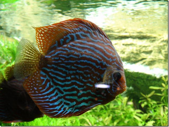 paris aquarium 102210 0006