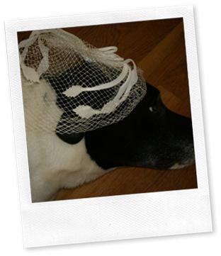 trixie hat