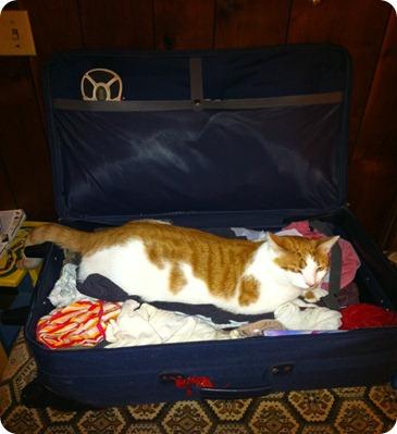 ernie travel