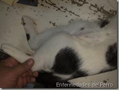 gato atropellado (1)