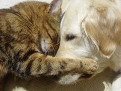 Gato e Cahorro