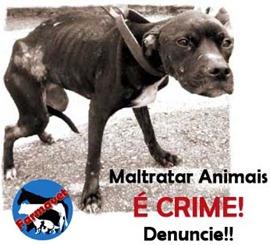 maus tratos em animais