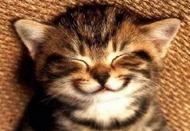 gato_feliz