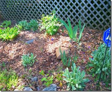 Spring Garden 032