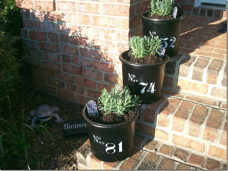Flower Pots 028