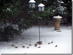 dovesandsparrowsatfeedersnow121610