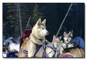 Winterdance Dogsled Team
