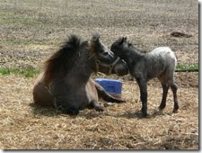horseapril21