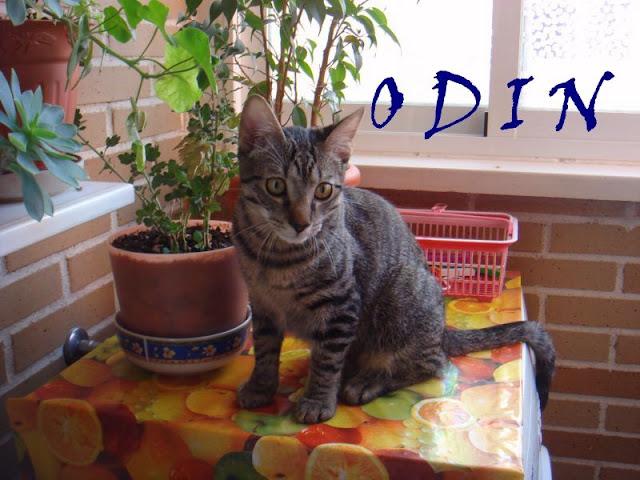 ODIN cachorro de 8 meses necesita una segunda oportunidad. Alava (toda España) Odin1%5B1%5D
