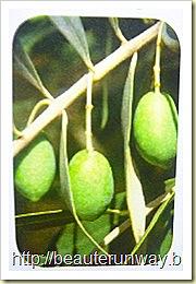 organic olive oil ltaly