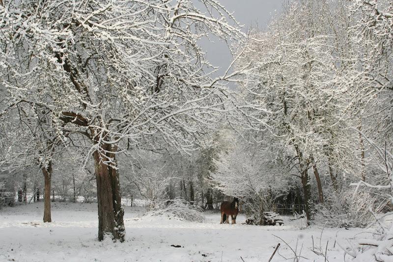 Le  calvados sous la neige... les chevaux s'éclatent! IMG_5542