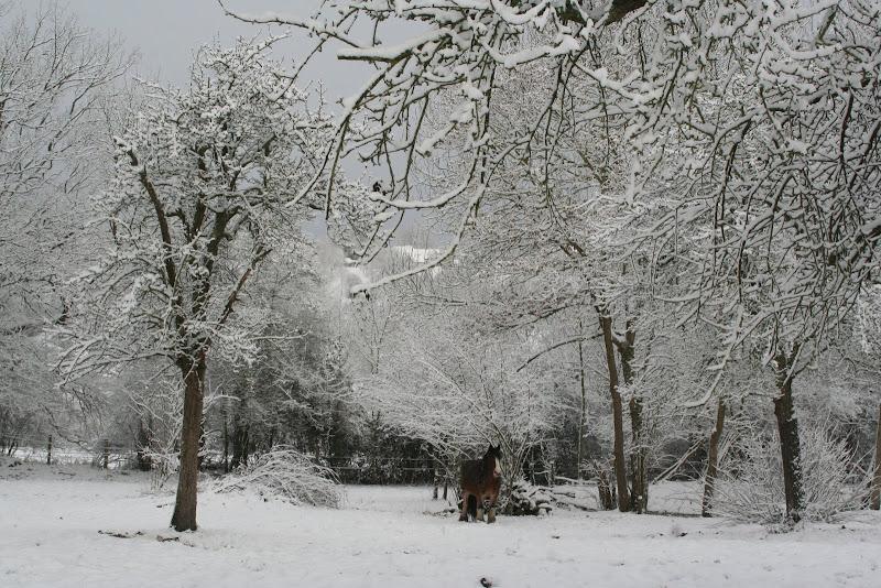 Le  calvados sous la neige... les chevaux s'éclatent! IMG_5547