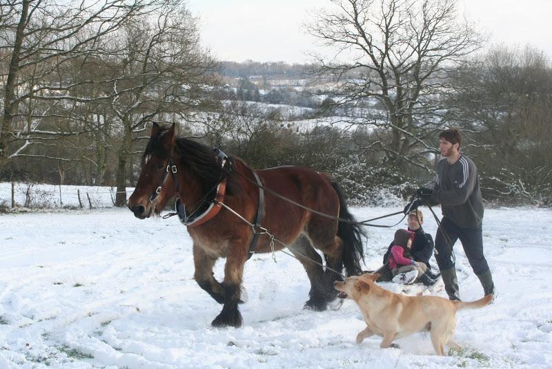 Le  calvados sous la neige... les chevaux s'éclatent! IMG_5255