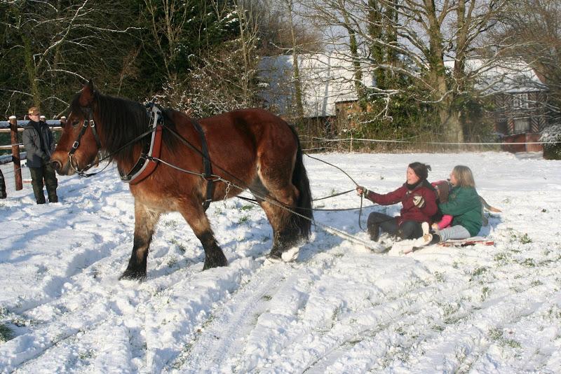Le  calvados sous la neige... les chevaux s'éclatent! IMG_5236