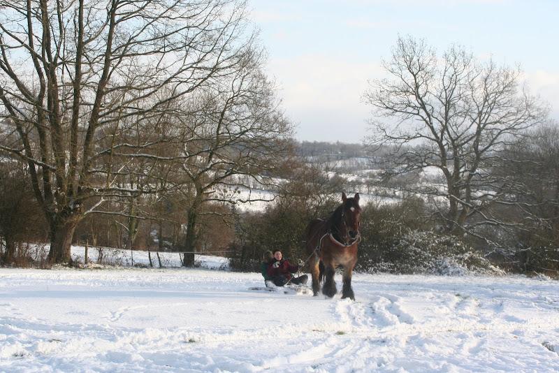Le  calvados sous la neige... les chevaux s'éclatent! IMG_5218