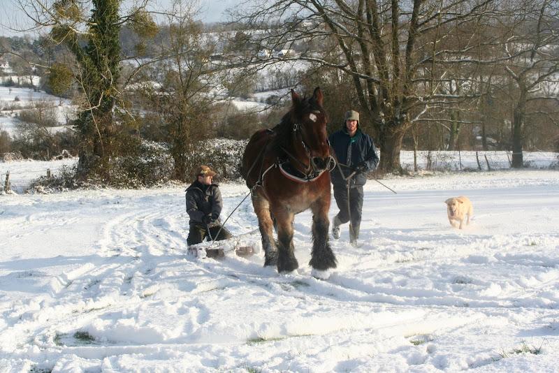 Le  calvados sous la neige... les chevaux s'éclatent! IMG_5195