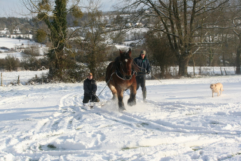 Le  calvados sous la neige... les chevaux s'éclatent! IMG_5194
