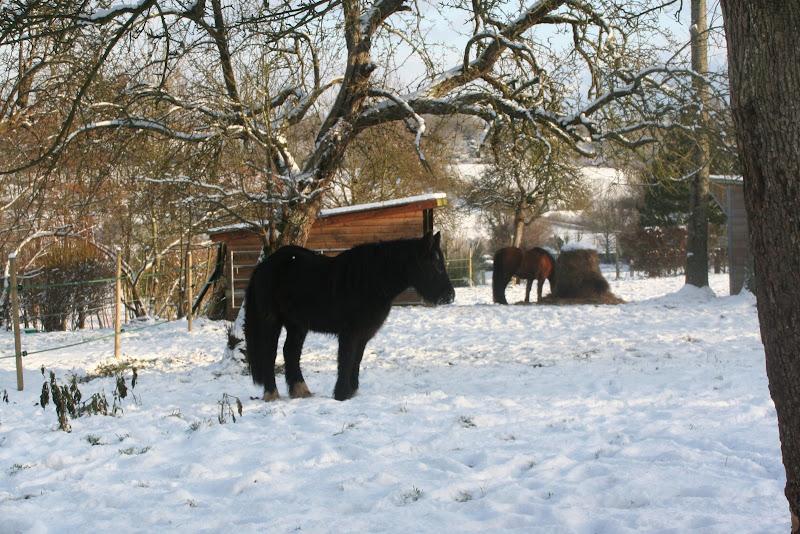 Le  calvados sous la neige... les chevaux s'éclatent! IMG_5170