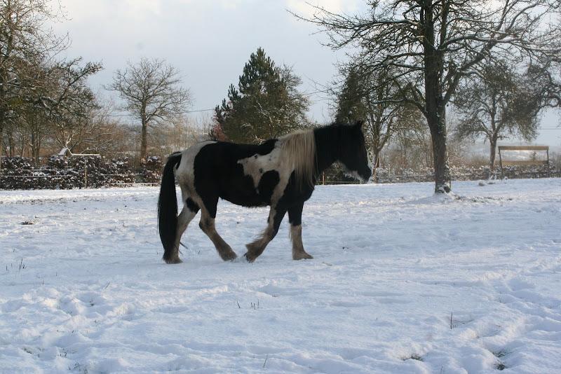 Le  calvados sous la neige... les chevaux s'éclatent! IMG_5164