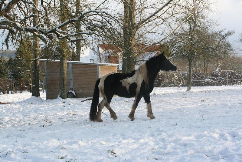 Le  calvados sous la neige... les chevaux s'éclatent! IMG_5161