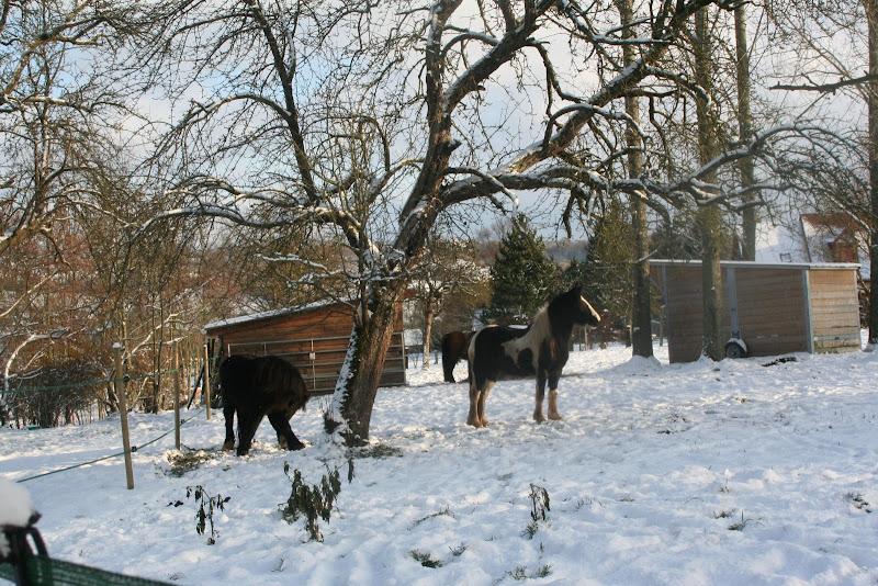 Le  calvados sous la neige... les chevaux s'éclatent! IMG_5157