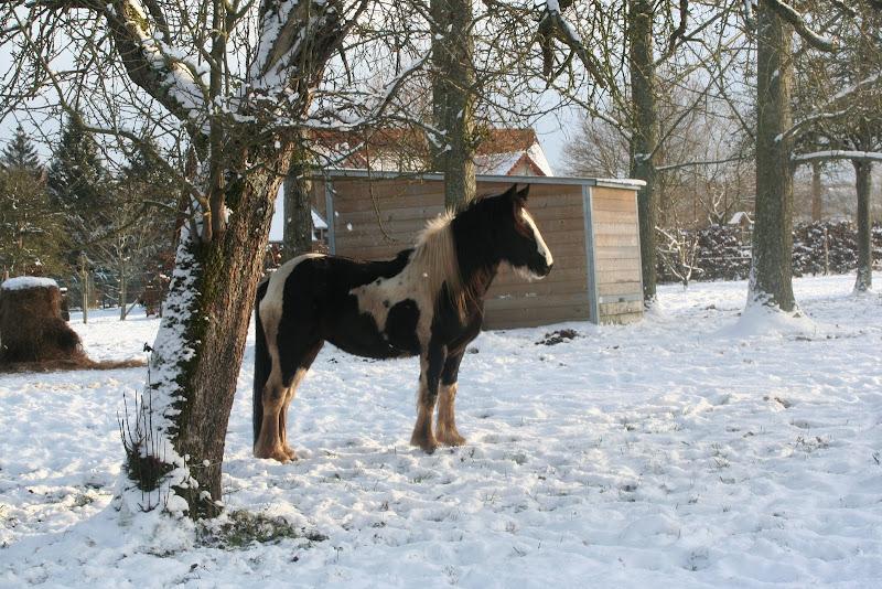 Le  calvados sous la neige... les chevaux s'éclatent! IMG_5154