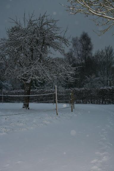 Le  calvados sous la neige... les chevaux s'éclatent! IMG_5046