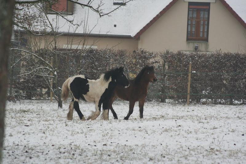 Le  calvados sous la neige... les chevaux s'éclatent! IMG_4995