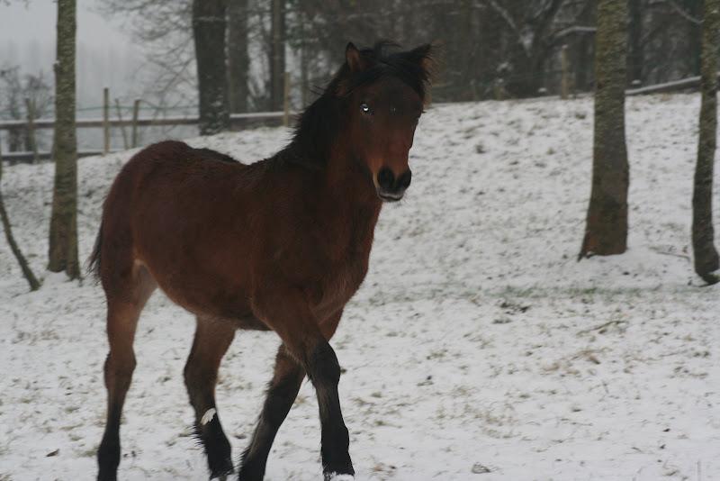 Le  calvados sous la neige... les chevaux s'éclatent! IMG_4991
