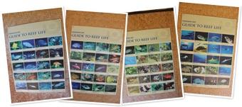 Hanauma Bay deniz canlıları albümünü görüntüle