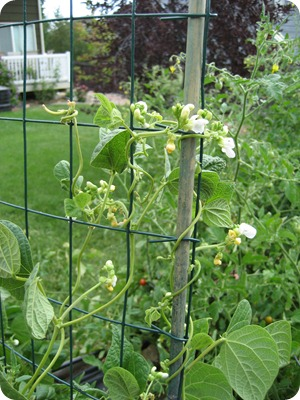 veg garden last year