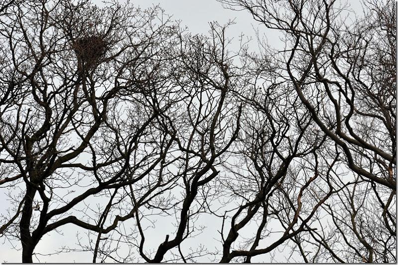 treetop hospitality