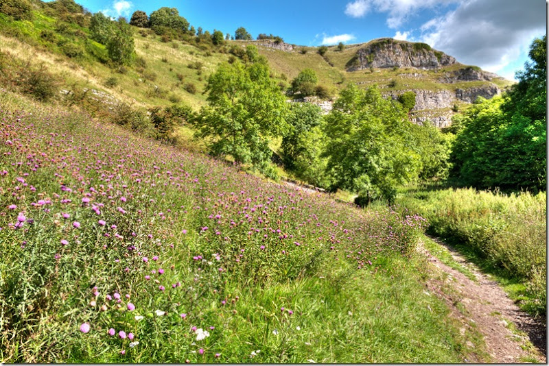 lathkill dale thistle patch copy