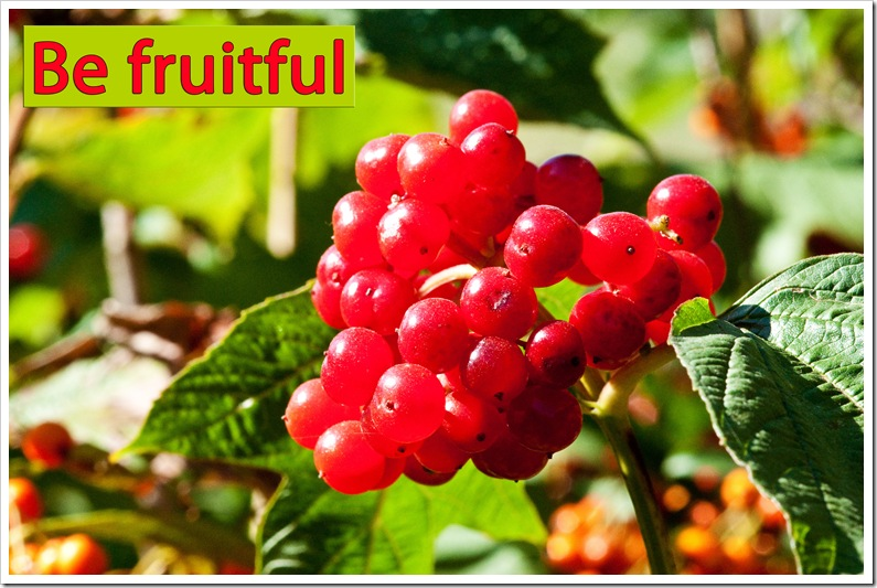 be fruitful ripe red berries on shrub