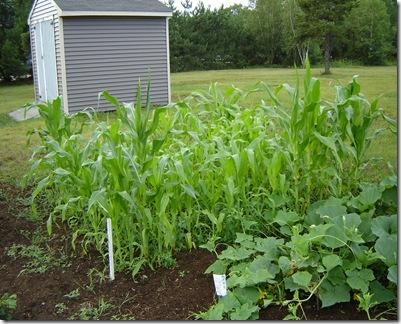 corn&cukes