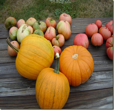 pumpkin&tomato