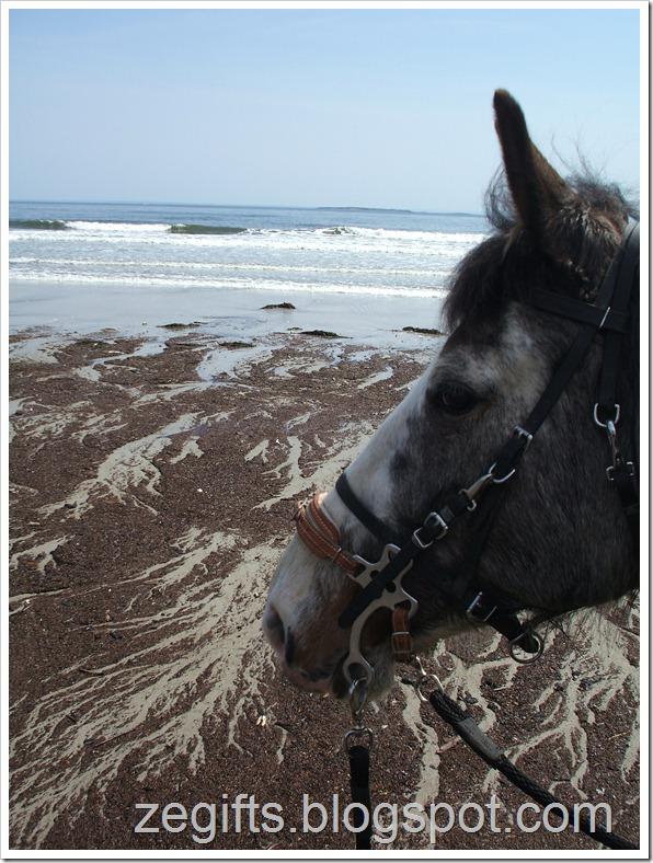 April10-Beach 007