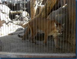 Albq Zoo (18)