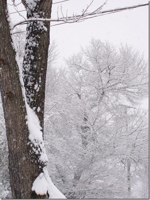 snow-Kev 2010-02-06 032