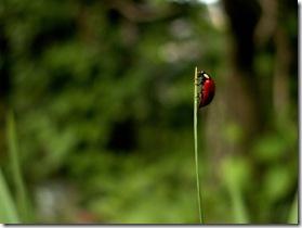 ladybird ladybug climb