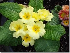 april 5 flowers & sun2