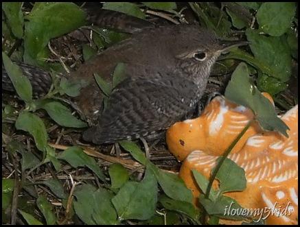 Birdie Take 3