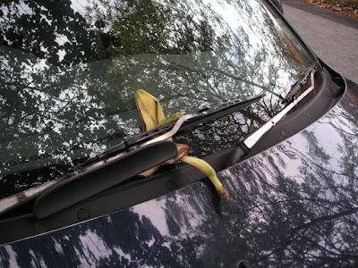 Banana under wiper blade.