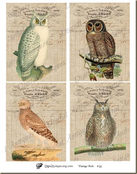 Owls_web