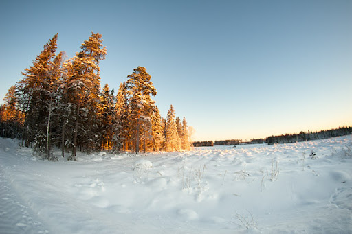 Vinterbild med fisheye
