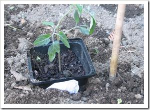 parkers planting