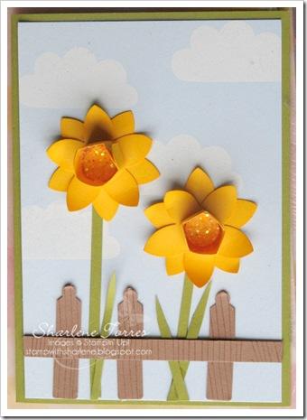 daffodils card