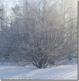 winter '09-'10 009