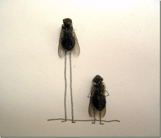 mosca5